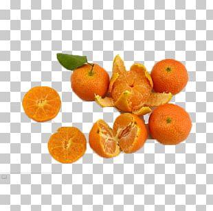 Clementine Mandarin Orange Blood Orange Tangelo Rangpur PNG