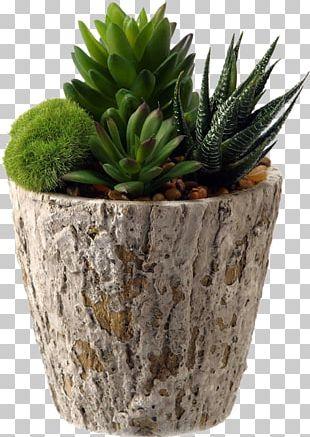 Aloe Vera Succulent Plant Silk Flowerpot Artificial Flower PNG