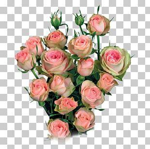 Garden Roses Cabbage Rose Cut Flowers Flower Bouquet Floral Design PNG