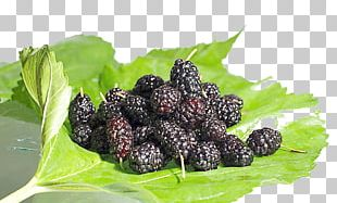 Frutti Di Bosco Black Mulberry Fruit Seed Food PNG