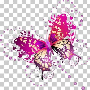 Butterfly Photography Illustration PNG