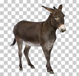 Donkey Mule PNG
