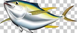 Bigeye Tuna Albacore Pacific Bluefin Tuna Yellowfin Tuna Illustration PNG