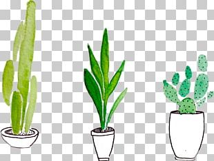 Watercolor Painting Drawing Plant PNG