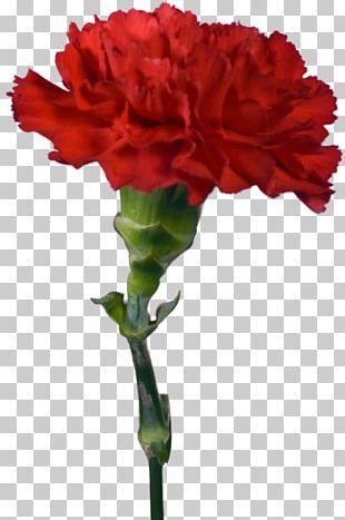 Garden Roses Carnation Cut Flowers PNG