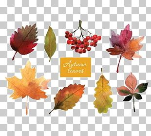 Autumn Leaf Color Autumn Leaf Color Watercolor Painting PNG