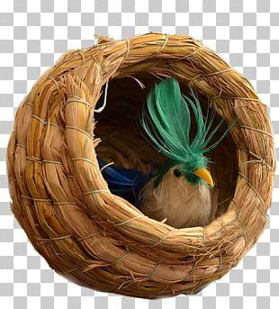 Bird Budgerigar True Parrot Nest PNG