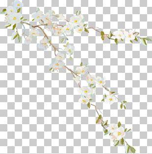 Flower Vine Desktop PNG
