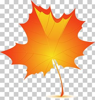 Autumn Leaf Color Birch PNG