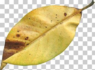 Autumn Leaf File Formats PNG