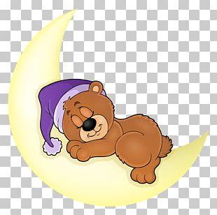 Bear Sleep Illustration PNG