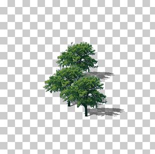 Branch Top Tree PNG