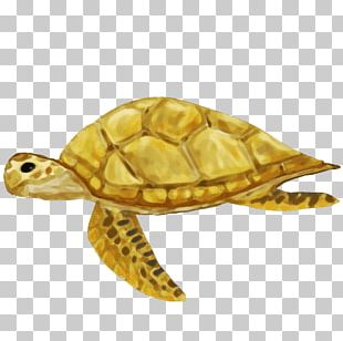 Box Turtles Sea Turtle Tortoise PNG