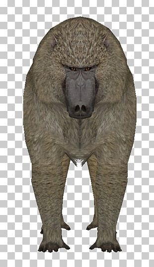Fauna Mammal Fur Terrestrial Animal Snout PNG