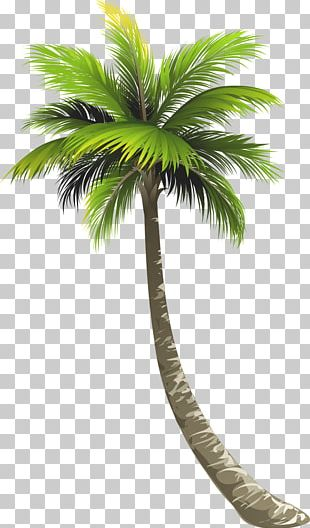 Ernakulam Royal Palm Beach Arecaceae Lake Worth Coconut PNG