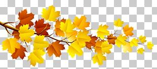 Branch Autumn Tree PNG