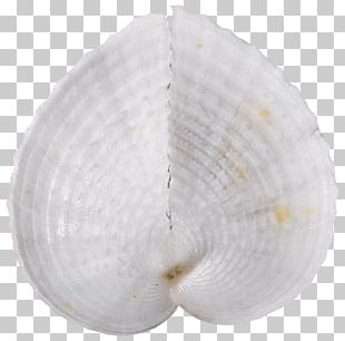 Tyre Conchology Mollusc Shell Cockle Seashell PNG