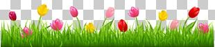 Parrot Tulips Flower PNG