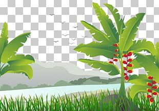 Banana Leaf Tree Illustration PNG