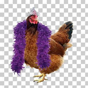 Chicken Coop Duck Hen Poultry PNG