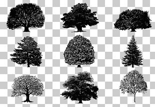 Tree Silhouette PNG