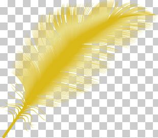 Yellow Feather Close-up PNG