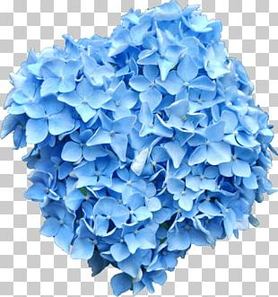 French Hydrangea Flower Blue PNG