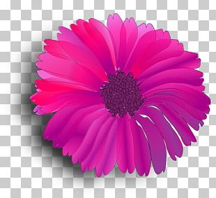 Pink Flowers Pink Flowers Common Daisy PNG