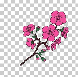 Cherry Blossom Tree Photography PNG