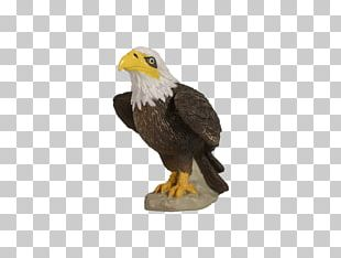 Bald Eagle Yowie Dinosaur Planet National Symbol PNG