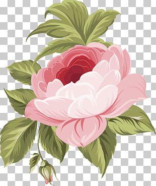 Flower Floral Design Rose PNG