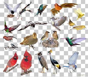 Bird Beak Feather Portable Network Graphics PNG