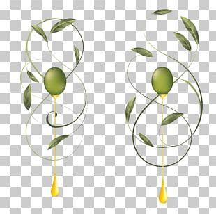 Olive Oil Paper Label PNG