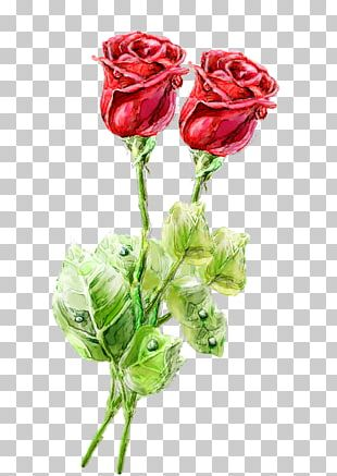 Beach Rose Watercolor Painting Computer File PNG