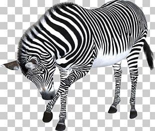 Zebra Computer File PNG