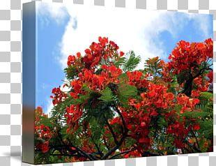 Blossom Tree Flower Garden Flower Garden PNG