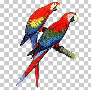 Parrots Of The World Bird Budgerigar Macaw PNG