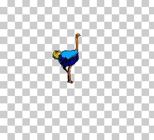 Chicken Bird Duck Goose Cygnini PNG