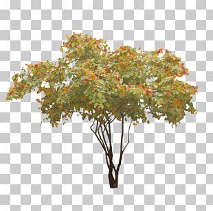 Treelet Clipping Path Shadbush PNG