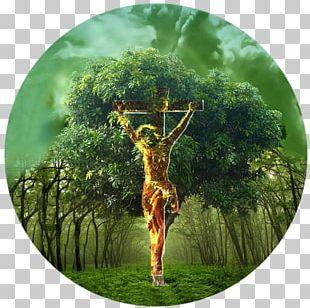 Bible Tree Of Life Garden Of Eden Genesis PNG