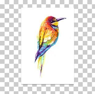 Fauna Hummingbird M Beak Feather PNG