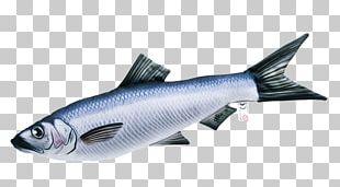 Goldfish Pillow Perch Fishing PNG