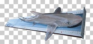 Tiger Shark International Game Fish Association Measurement PNG
