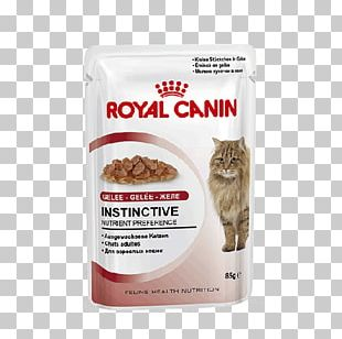 Cat Food Dog Royal Canin Kitten Feline Health Nutrition Kitten Dry Food PNG
