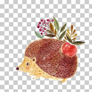 Hedgehog Euclidean Illustration PNG