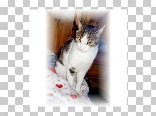 Whiskers Aegean Cat Norwegian Forest Cat Kitten Domestic Short-haired Cat PNG