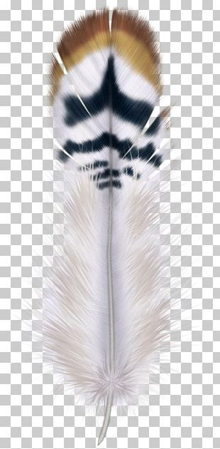 Feather Bird Hair PNG