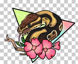 Ball Python Corn Snake Reptile Drawing PNG