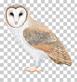 Barn Owl Drawing PNG