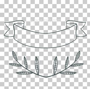 Angle Leaf Photography PNG